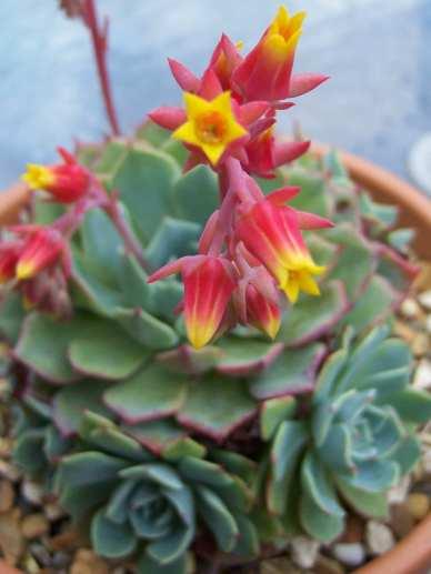 succulentbloominspo